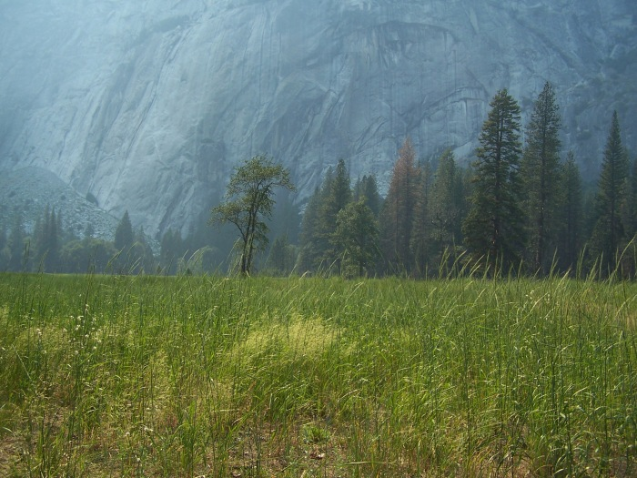 Leidig Meadow, Yosemite National Park 2009.